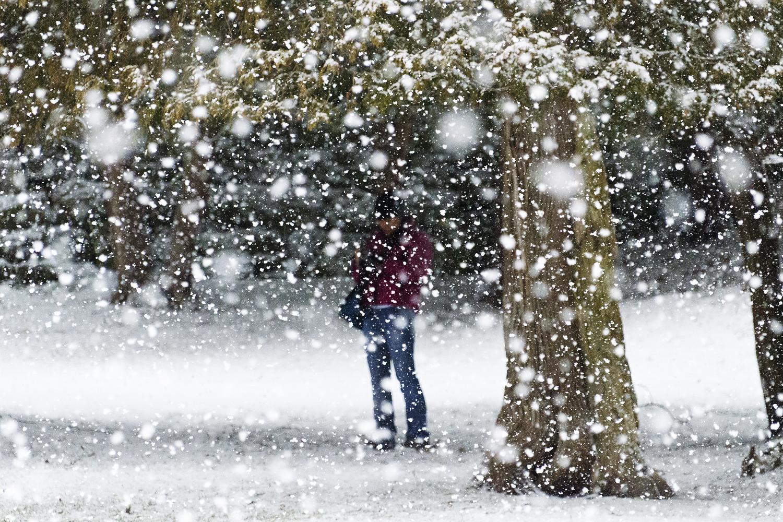 Snow, Webster's Falls, Winter
