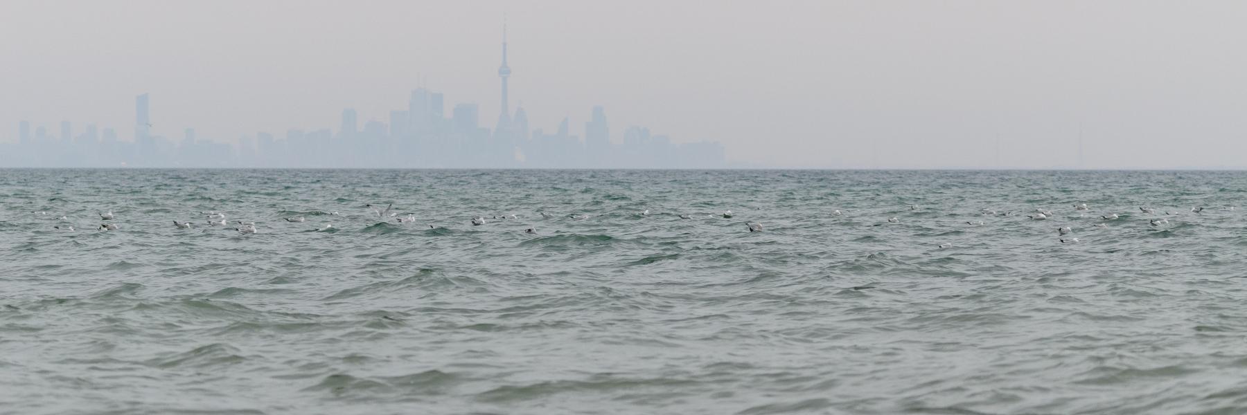 Seagulls against a misty Toronto skyline.